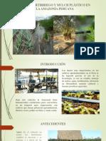 RIEGO, FERTIRRIEGO Y MULCH PLÁSTICO EN LA AMAZONÍA PERUANA