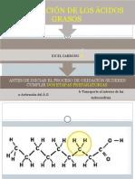 Β-Oxidación de Los Á.G.