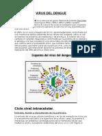 VIRUS DEL DENGUE-proyeccionsocial