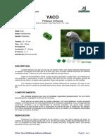Ficha YACO _Psittacus Erithacus Erithacus