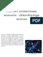 Neurobiologia - neurony.pdf