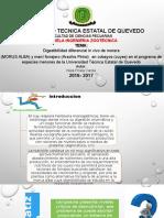 Proyecto Diapo Cuy
