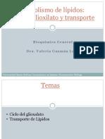 Clase2_Transporte de Lípidos y Ciclo Del Glioxilato