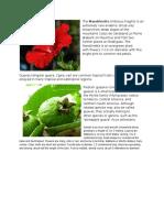 PLANTS-PA-MORE.docx