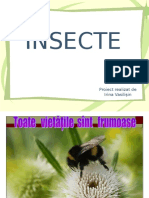 4_insecte.ppt