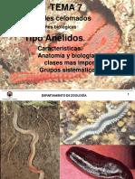 Tema 7 Anfibios - Zoologia Ambiental - Universidad de Córdoba