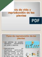 Ciclo de Vida y Reproducción de Las Plantas