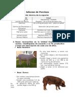 Informe de Porcinos