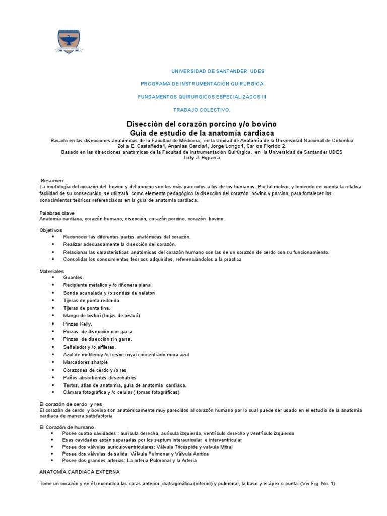 Contemporáneo Anatomía Externa Cerdo Regalo - Imágenes de Anatomía ...