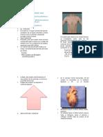 Guia de Anatomia Cardiaca Udes