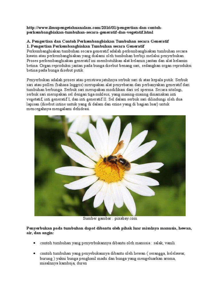 Contoh Gambar Bunga Yang Berkembang Biak Secara Generatif Beserta Namanya Ragam Motif