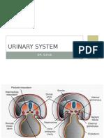 [3]Urinary System&Genital System