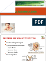 3 Human Reproduction