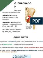 Musculo Cuadrado Femoral