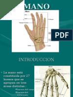 Anatomia de La Mano - Anatomia Humana