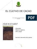 Deficiencias en Cacao (3)