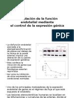 Regulación de La Función Endotelial Mediante