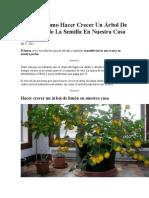 Aprende Como Hacer Crecer Un Árbol de Limón Desde La Semilla en Nuestra Casa