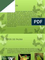 faunadelmundo-130821105605-phpapp02