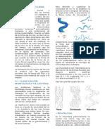 morfologia de un rio.docx
