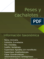 Peses y Cachalotes