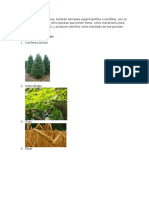 Las plantas fanerógamas.docx