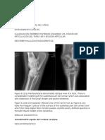 radiologia equina