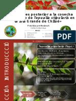 """""""Evaluaciones post-cosecha de un bosque de Tepualia stipularis en la Isla Grande de Chiloé"""""""