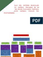 4. Desarrollo Del Sistema Osteomuscular (1)