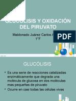 Glucólisis y Oxidación Del Piruvato