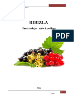 RIBIZLA