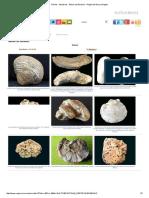 Fósiles - Moluscos - Álbum de Bivalvos - Región de Murcia Digital.pdf