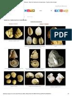 Fósiles - Moluscos - Álbum de Clasificación de Gasterópodos - Región de Murcia Digital2.pdf