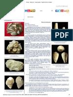 Fósiles - Moluscos - Gasterópodos - Región de Murcia Digital.pdf