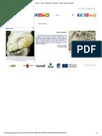 Fósiles - Otros Cefalópodos - Aptychus - Región de Murcia Digital.pdf