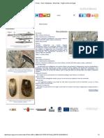 Fósiles - Otros Cefalópodos - Belemnites - Región de Murcia Digital.pdf