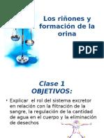 Sistema Excretor Báica 2016