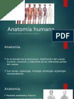 Anatomía. Clase 1.pptx