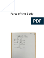body parts packet