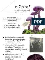 Laccaria amethystina and ectomycorrhizal continental species complexes - presentation