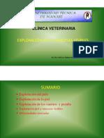 3.- Exploración Piel y Mucosas Visibles