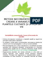C.vitic-Inducerea Variabilitatii