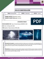 Datos ballena azul.pdf