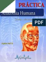 anatomia superior