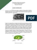 CLOROPLASTOS ESTRUCTURA.docx
