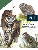 Los Buhos Neotropicales