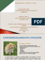 Enfermedades en Conejos y Cuyes
