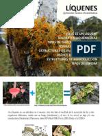 LIQUENES morfología, clasificación y usos 2015