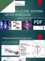 DESARROLLO-DEL-SISTEMA-OSTEO-MUSCULAR.pptx