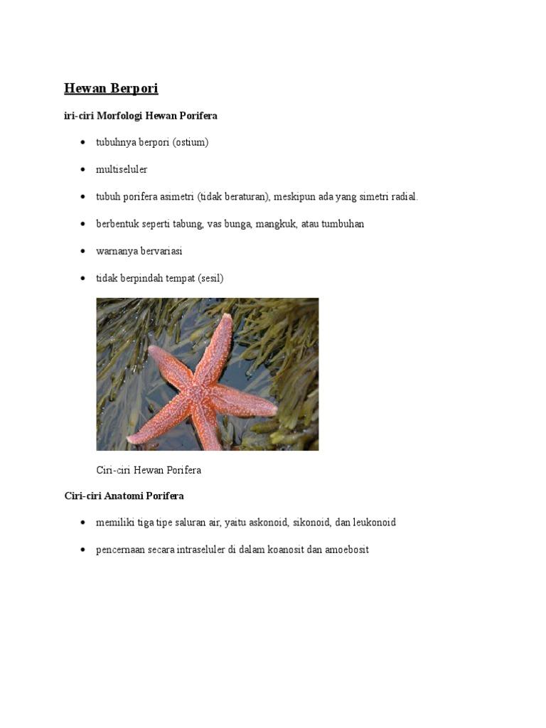 48 Koleksi Ciri Dan Gambar Hewan Porifera Gratis